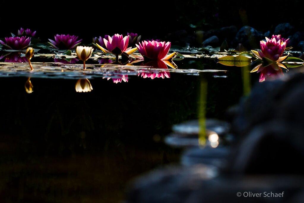 Makro-Garten-20120527-0064.jpg